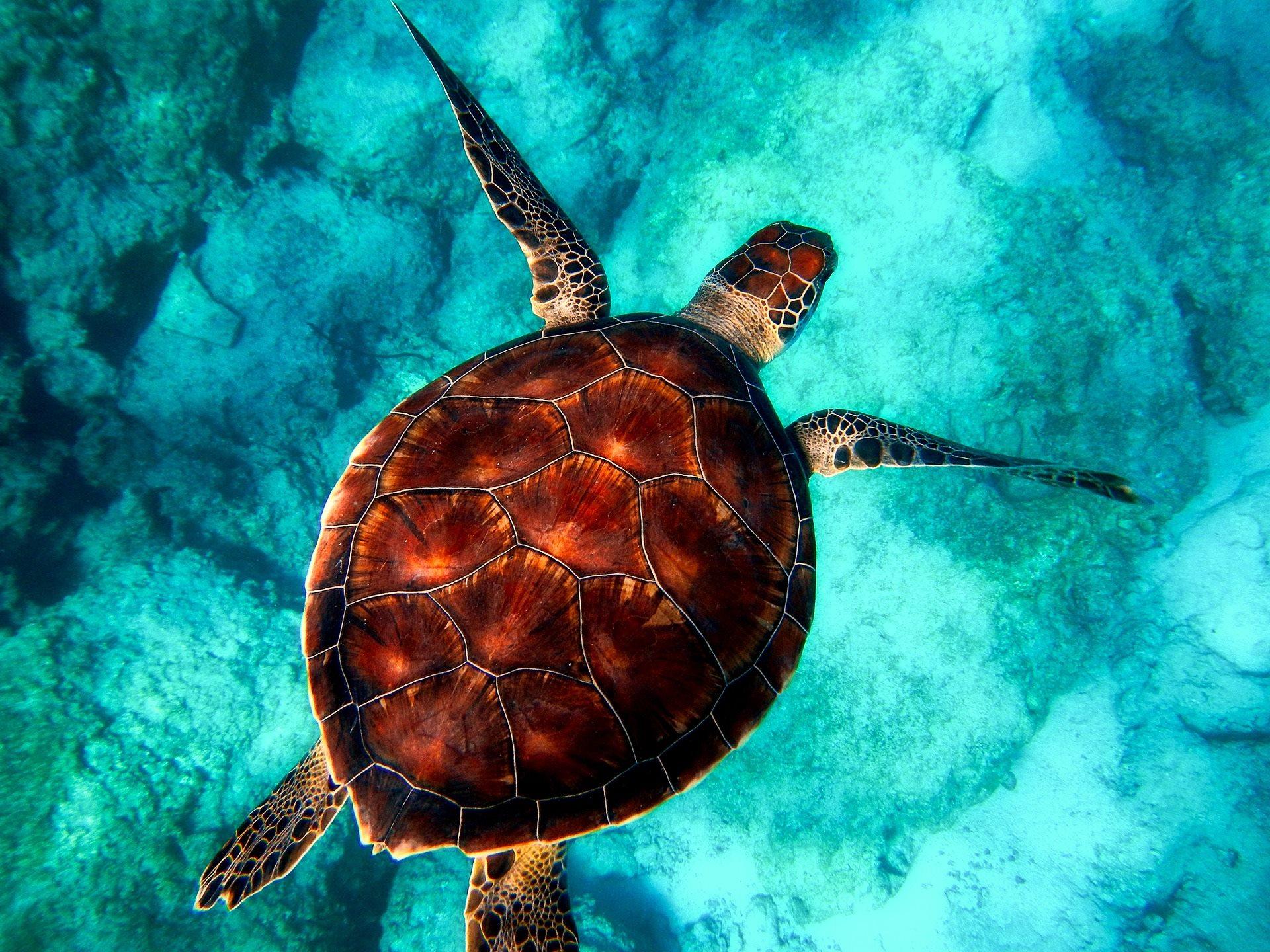 Turtle Bali Maya Yoga Retreat Body Mind Soul